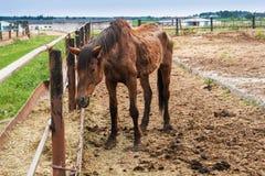 Thin big horse stock image