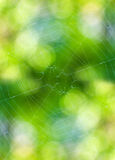 Thin black cobweb Stock Photos