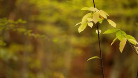 Thin Branch stock video footage