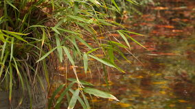 Thin branches of reeds bent to the stream in which the floating yellow leaves stock video