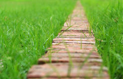 Thin Brick path Stock Images