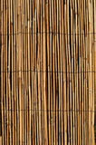 Thin cane bamboo with wire background Stock Photography