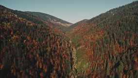 Thin curvy mountain river under blue sky in early morning. Thin curvy mountain river surrounded by pine and brown deciduous trees under clear blue sky in early stock video footage