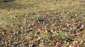 Grass among fallen leaves sways in wind on sunny day stock video footage