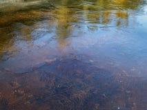 Thin ice on a shallow lake Stock Photos