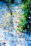 A thin layer of white snow on woodland ground peaking through th. A layer of fluffy white snow on a woodland ground, peaking through the snow is the ground below Stock Photos