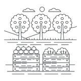 Thin line style fruits garden yard concept with wooden crate of apples vector illustration. Thin line style fruits garden yard concept with wooden crate of stock illustration