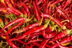 Thin long pods chili peppers many fruits set of vegetables seasoning flavoring background design royalty free stock photography