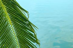 Thin palm branch on the background of the sea royalty free stock image