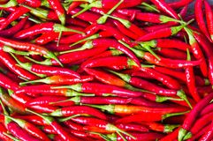 Thin red peppers on a pile background Royalty Free Stock Photography