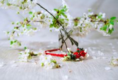 Thin red wreath with cherry blossom. Flower crown Royalty Free Stock Photos