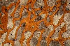 Thin section of a dinosaur bone Royalty Free Stock Photography