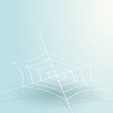 Thin spider web Royalty Free Stock Photo