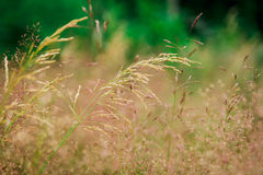 Thin stems on meadow Stock Photography