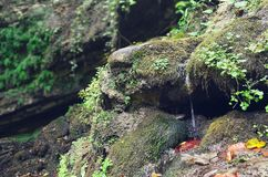 A thin stream of spring water flows through mossy stones stock photos