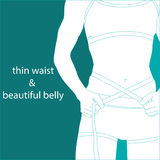 Thin waist and beautiful belly Stock Image