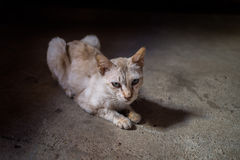 Thin yellow cat. Laying at cement street Royalty Free Stock Image
