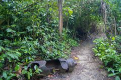 Thing of the past at Cahuita Park. Costa Rica stock photos