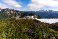Wildflowers at North Cascades National Park in the summer Royalty Free Stock Photos
