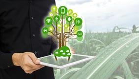 thingsagriculture概念互联网  聪明种田,人举行象与聪明的农厂概念的taplet在甘蔗领域b 免版税图库摄影