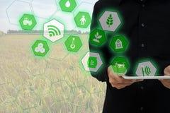 thingsagriculture概念,聪明种田,工业农业互联网  农夫举行片剂和使用增添了现实t 免版税库存图片