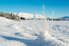 Thingvellir park narodowy w zimie, hoarfrost na trawie, Iceland Obraz Royalty Free