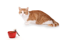 Think different. Humor concept with cat and mouse Stock Photo