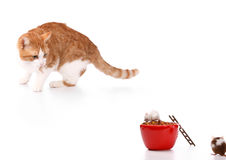 Think different. Humor concept with cat and mouse Royalty Free Stock Images