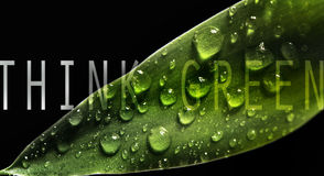 Think green. Ecology conceptual image Royalty Free Stock Photos