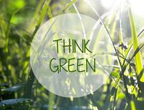 Think green ecology friendly concept on natural green grass background. Selective focus Stock Photos