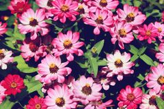 Think Pink,Beautiful summer pink flowers Royalty Free Stock Photos