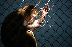 Thinker in a zoo Royalty Free Stock Image
