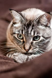 The thinking cat. A cat seems to be thinking about his stuff Royalty Free Stock Photo