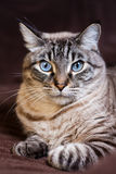 The thinking cat. A cat seems to be thinking about his stuff Royalty Free Stock Image