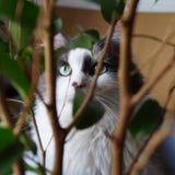 Thinking cat Royalty Free Stock Image