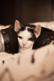 Thinking cat listening to music Royalty Free Stock Photography