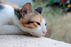 Thinking cat Stock Photo