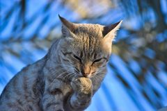 Thinking Cat Stock Photo