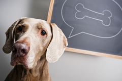 Free Thinking Dog Stock Photography - 18996442