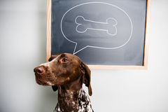 Thinking dog Royalty Free Stock Photography