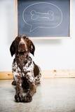 Thinking dog Stock Photography