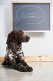 Thinking dog Stock Photography