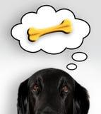 Thinking dog. Black dog thinks on tasty bone stock image