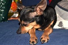 Thinking Dog Stock Photos