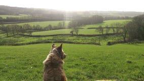 Thinking dog Royalty Free Stock Images