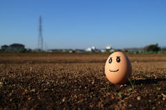 Thinking egg standing on the soil field Stock Photos