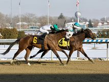 Thinking of Glenn beats Charming Cara. On a cold snowy Winter day at the Big A. These two talented fillies finished heads apart in a dueling thrilling finish stock image