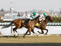 Thinking of Glenn beats Charming Cara. On a cold snowy Winter day at the Big A. These two talented fillies finished heads apart in a dueling thrilling finish stock photography