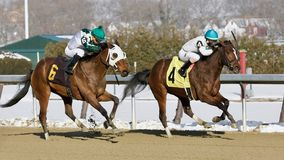 Thinking of Glenn beats Charming Cara. On a cold snowy Winter day at the Big A. These two talented fillies finished heads apart in a dueling thrilling finish royalty free stock image