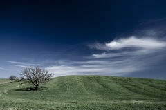 Green landscape with blue sky and clouds Stock Images
